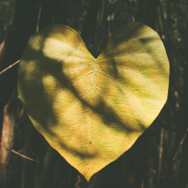 Mindful Self-Compassion Retreat