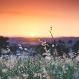 Morning Mindfulness Meditation