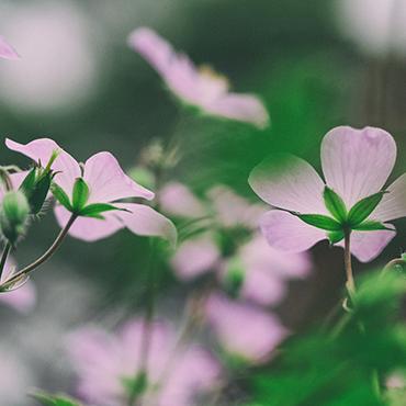 Mindfulness for Cancer
