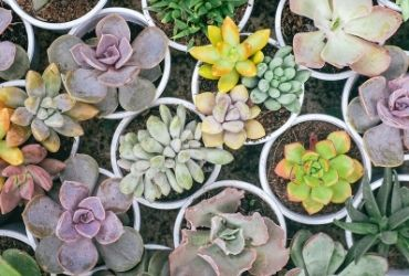 Selection of Varied Potted Plants