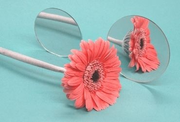 Flower and Mirror